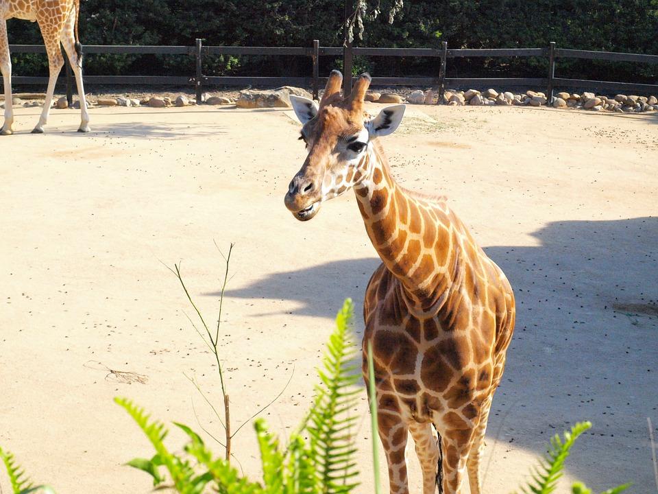 Visiter en toute tranquillité le zoo de Taronga
