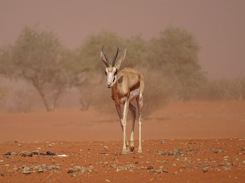 La particularité du désert de Kalahari