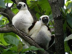 Quelques merveilles à découvrir dans le nord de Madagascar