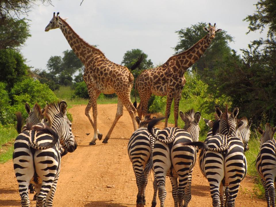 Les types de voyages touristiques de Tanzanie