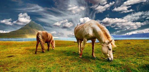 Circuit en Islande : Randonnée équestre et découverte des chevaux islandais