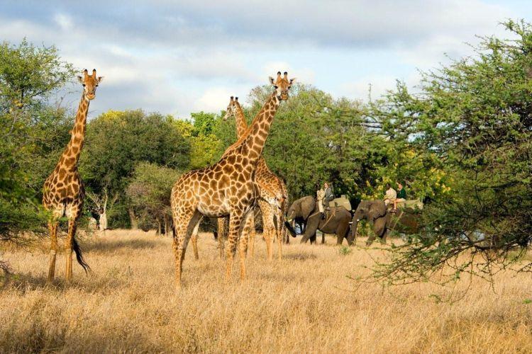 Pour un voyage safari Afrique : quelle destination choisir??