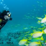 plongée-Mexique