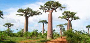 Madagascar : découvrir la magnificence naturelle de cette île