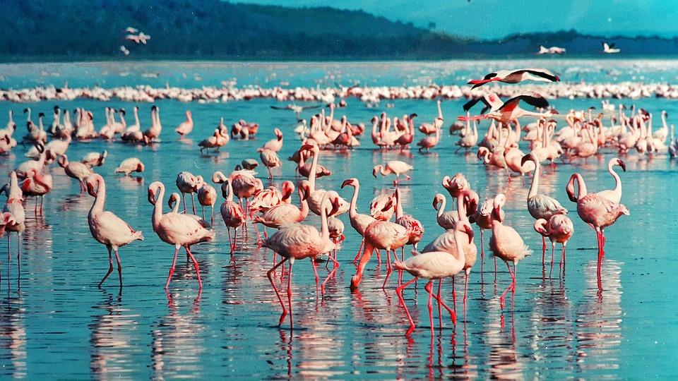 Séjour safari au Kenya : à la découverte de 3 sites méconnus