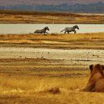 La Tanzanie, un pays africain aux multiples activités touristiques