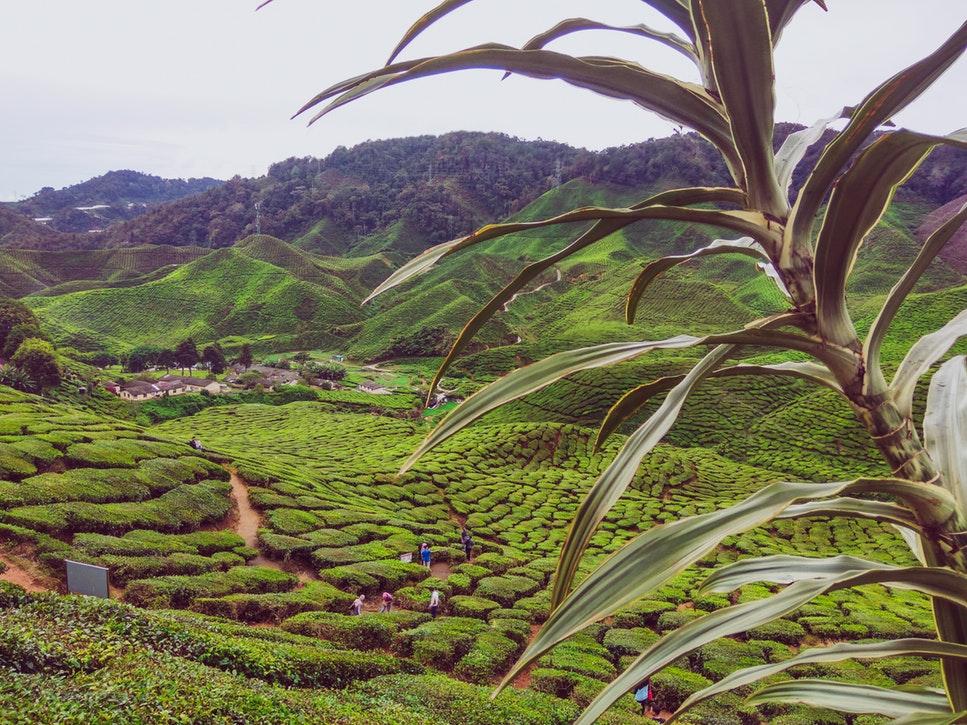 Où faire de la randonnée pendant des prestiges voyages en Malaisie?