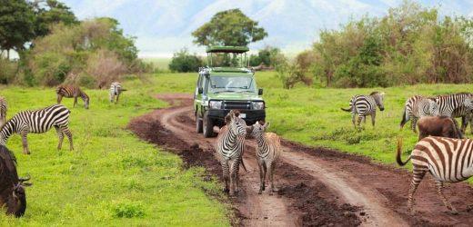 Top de conseils pour bien préparer un safari en Afrique